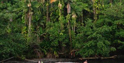 Rainforest_thumb